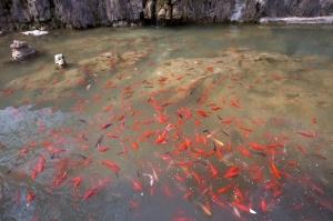 2011_Travel_China_Luoyang  015