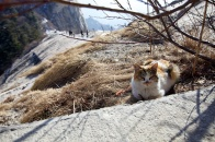 I guessed the cat was enjoying sun bathing and watching us crossing the ridge path.