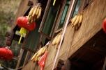 Dried corns.
