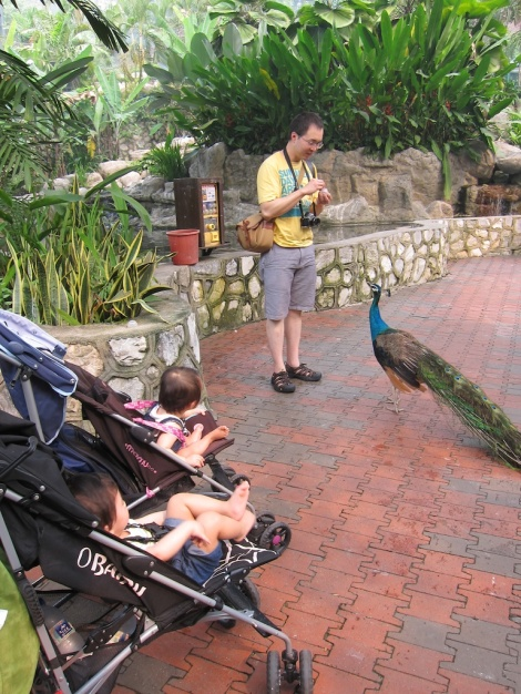 Ashton and Annabelle were fascinated by me feeding the peacock.