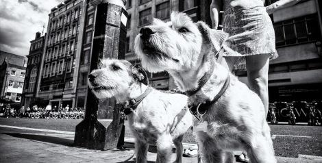 Jimmy Cheng, Lomography, Leica M Photographer, London