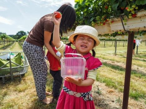 Strawberries picking!