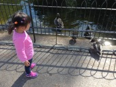 Visited St. James Park and Annabelle was curious about the ducks