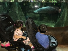 That giant lake fish really got their attention!
