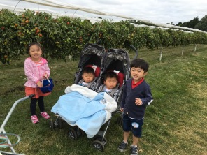 More fruit picking, this time with their cousins, also twins!