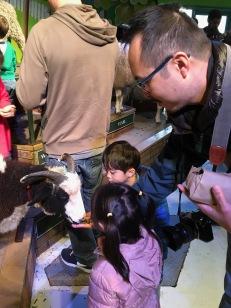 Feeding goats and sheep was fun.